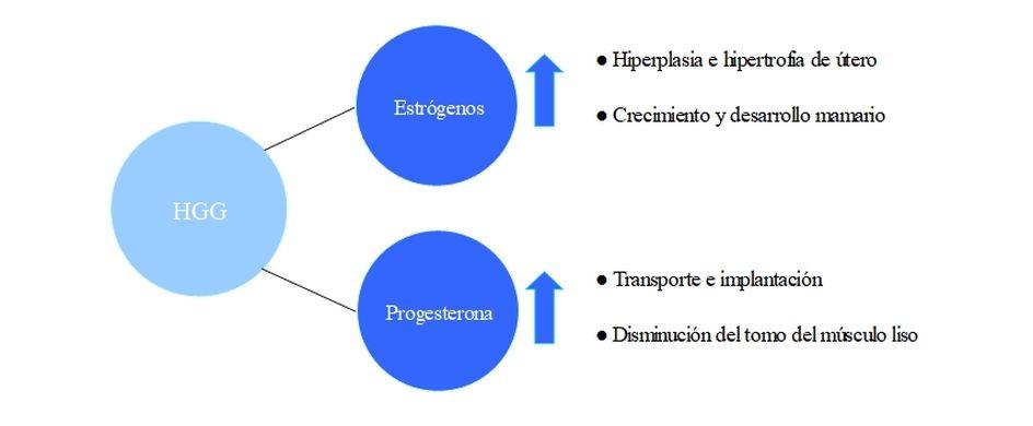 factores hormonales de la placenta